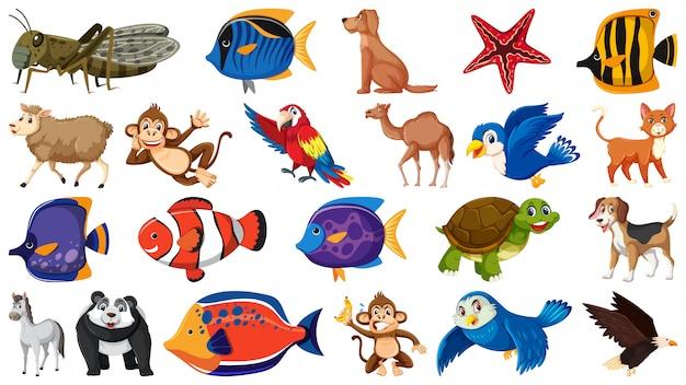 Conjunto de diferentes tipos de peixes e pássaros Vetor Premium