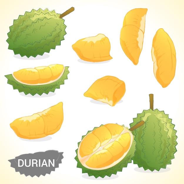 Conjunto de durian em vários formatos de vetor de estilos Vetor Premium