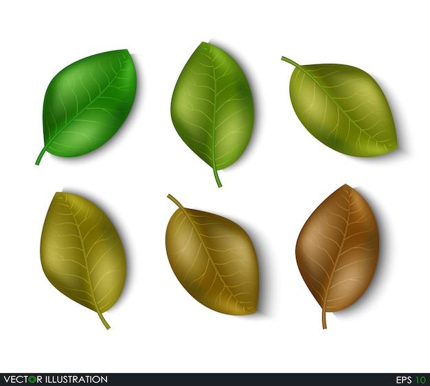 Conjunto de elementos de diferentes tons de folhas Vetor Premium