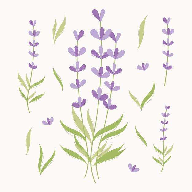 Conjunto de elementos de lavanda. ilustração de ervas Vetor Premium