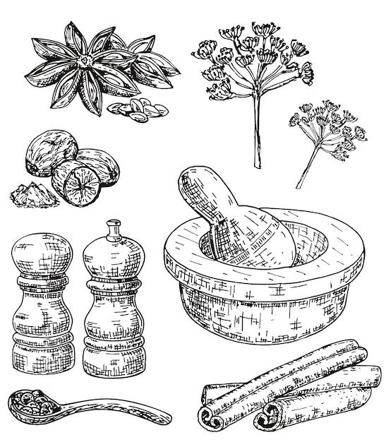 Conjunto de ervas e especiarias culinárias de mão desenhada de tinta Vetor Premium