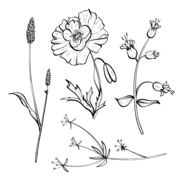 Conjunto de ervas e flores silvestres de mão realista Vetor grátis