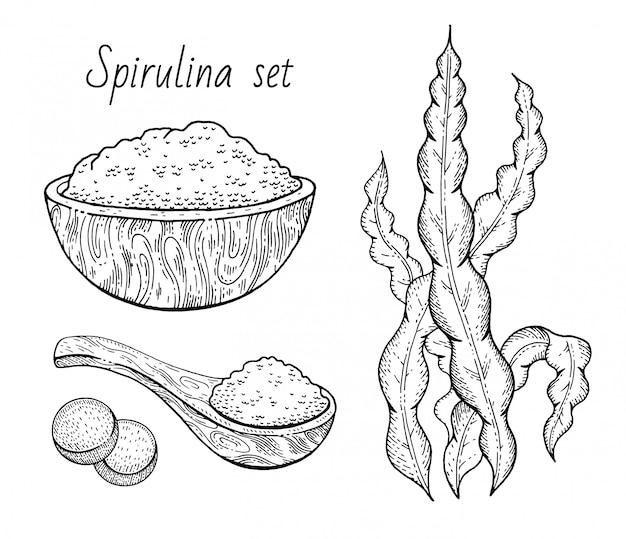Conjunto De Esboco De Algas Spirulina Planta Gravada Mao