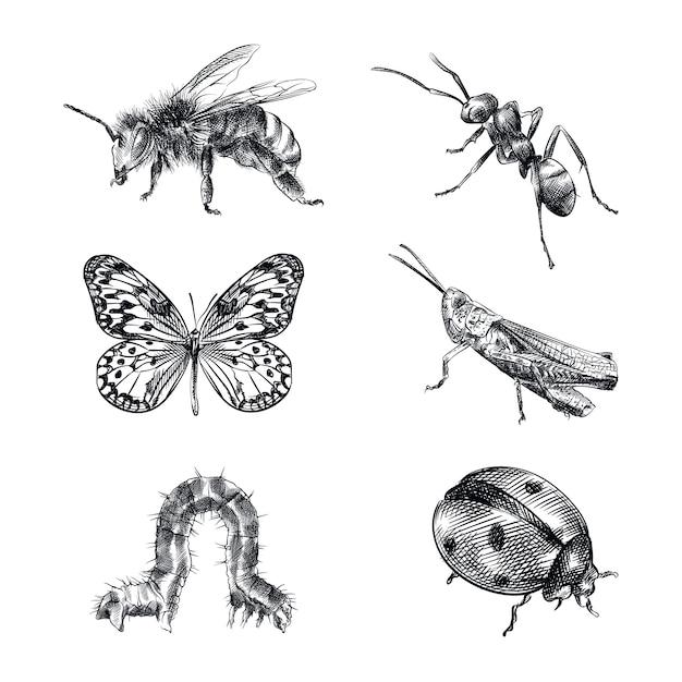 Conjunto de esboço desenhado à mão de insetos. o conjunto consiste em abelha, vespa, formiga, borboleta, gafanhoto, lagarta, joaninha Vetor Premium