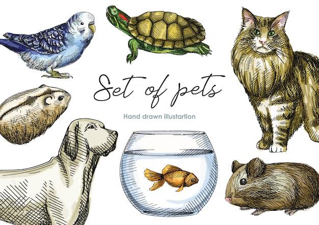 Conjunto de esboço desenhado à mão em aquarela colorida de animais domésticos. conjunto consiste em hamster, porquinho da índia, lagarto, tartaruga, cachorro, gato, tanque com peixe, papagaio Vetor Premium