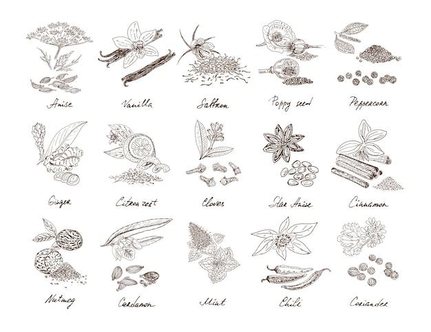 Conjunto de especiarias naturais desenhadas à mão Vetor grátis