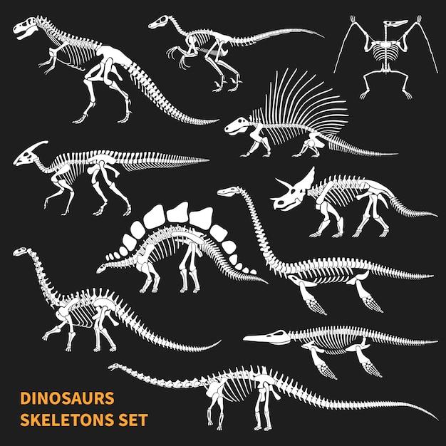 Conjunto de esqueletos de dinossauros Vetor grátis