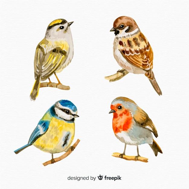 Conjunto de estilo aquarela de pássaros Vetor grátis