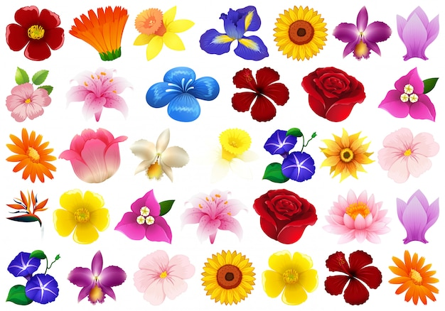 Conjunto de flor diferente Vetor grátis