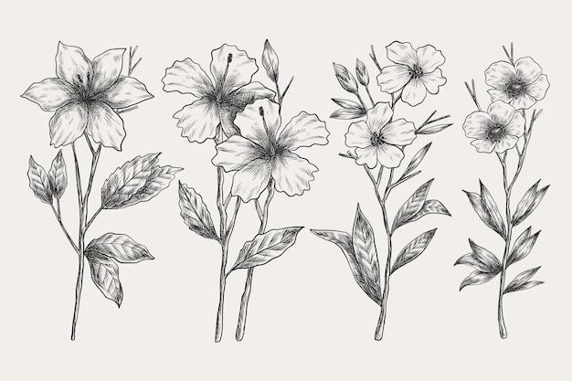 Conjunto de flor realista botânica vintage mão desenhada Vetor grátis