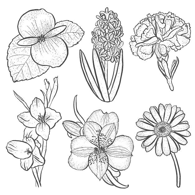 Conjunto de flores alstroemeria, begônia, cravo, gerbera e gladíolo, jacinto na mão desenhada estilo isolado Vetor grátis