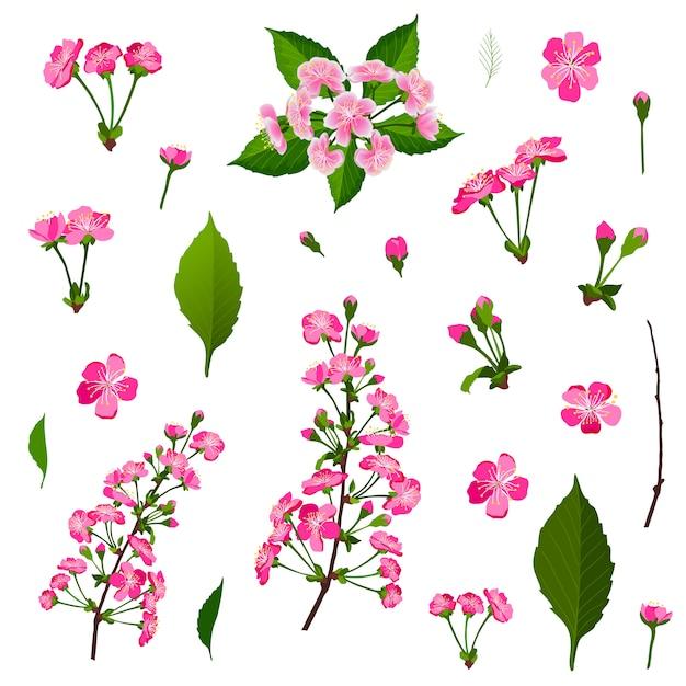 Conjunto de flores de cerejeira rosa Vetor Premium