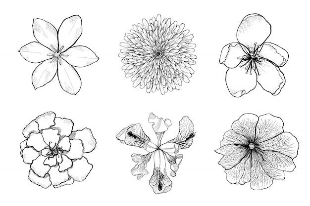 Conjunto de flores de vetor preto e branco mão desenhada. Vetor Premium