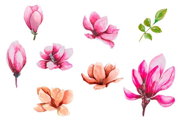 Conjunto de flores em aquarela magnólia Vetor Premium