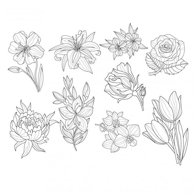 Conjunto de flores. ilustração desenhada mão Vetor Premium
