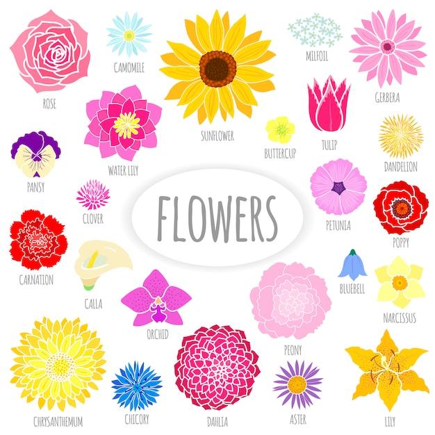 Conjunto de flores planas abstratas Vetor Premium