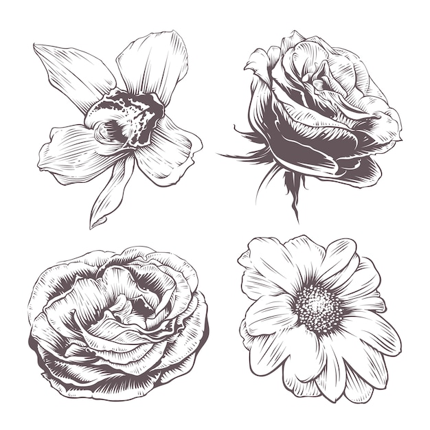 Conjunto de flores vetoriais Vetor grátis