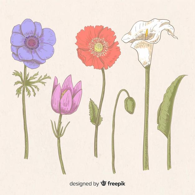 Conjunto de flores vintage desenhadas à mão Vetor grátis