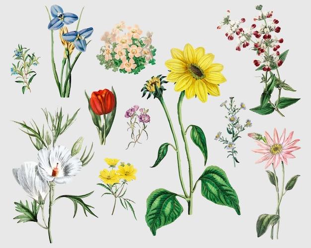 Conjunto de flores vintage Vetor grátis