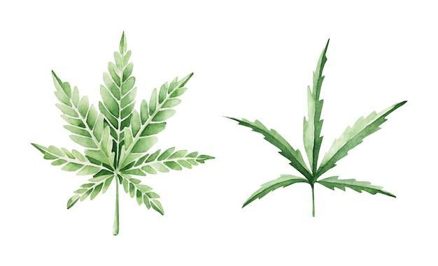 Conjunto de folhas de cannabis desenhadas à mão Vetor Premium