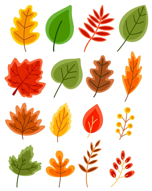 Conjunto de folhas de outono de vetor plana de carvalho, bordo, rowan, vidoeiro isolado no branco Vetor Premium