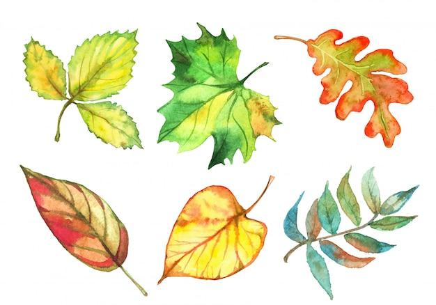 Conjunto de folhas de outono em aquarela. vetor Vetor Premium
