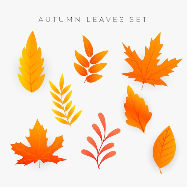 Conjunto de folhas de outono laranja Vetor grátis