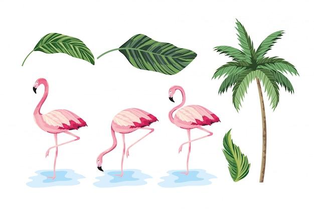 Conjunto de folhas exóticas e palmeira tropical Vetor Premium