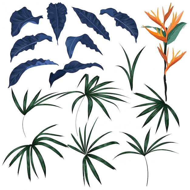 Conjunto de folhas tropicais e plantas exóticas vector Vetor Premium