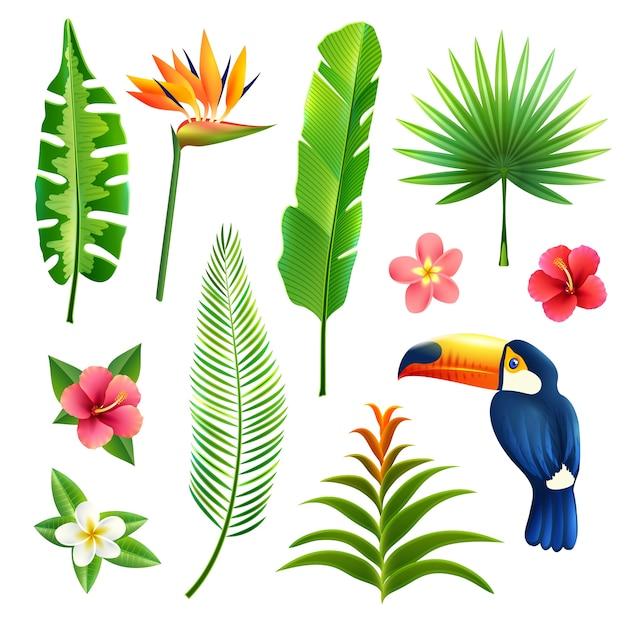 Conjunto de folhas tropicais Vetor grátis
