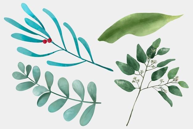 Conjunto de folhas verdes Vetor grátis