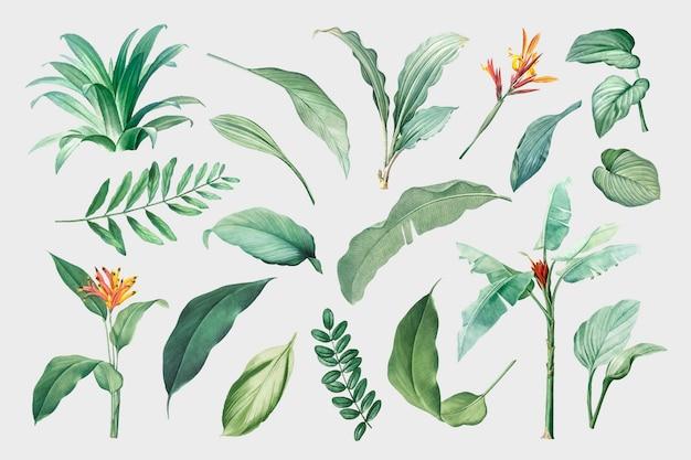 Conjunto de folhas Vetor grátis