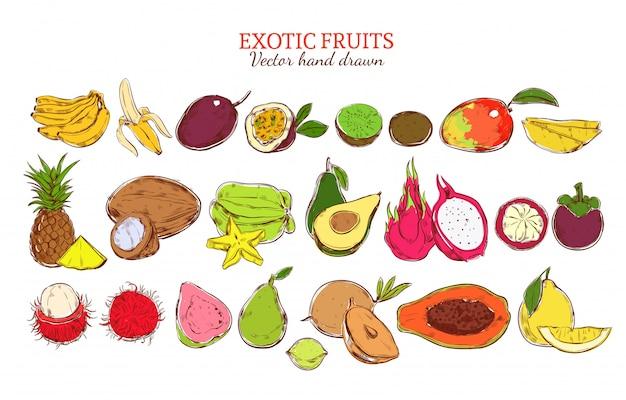Conjunto de frutas exóticas naturais frescas coloridas Vetor grátis