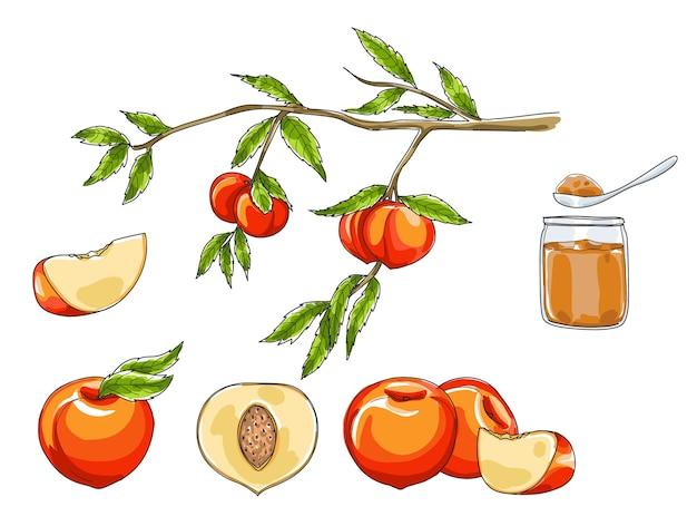 Conjunto de frutas pêssego mão desenhada arte vetorial Vetor Premium