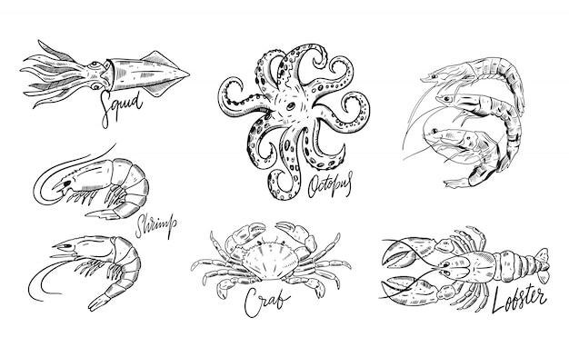 Conjunto de frutos do mar. ilustrações de mão desenhada. isolado no fundo branco Vetor Premium