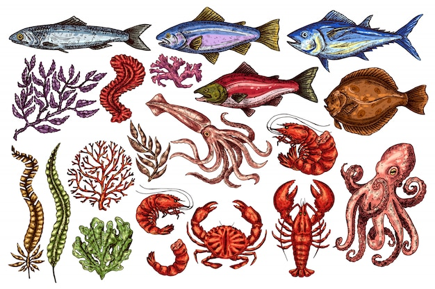 Conjunto de frutos do mar vintage. Vetor Premium