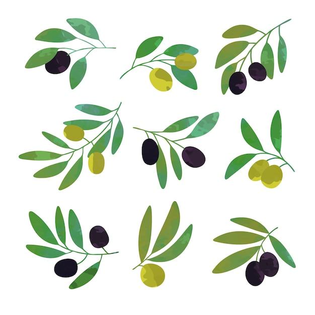 Conjunto de galhos de oliveira de ilustrações coloridas Vetor Premium