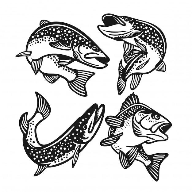 Conjunto de grande baixo, salmão, truta peixe preto e branco isolado Vetor Premium