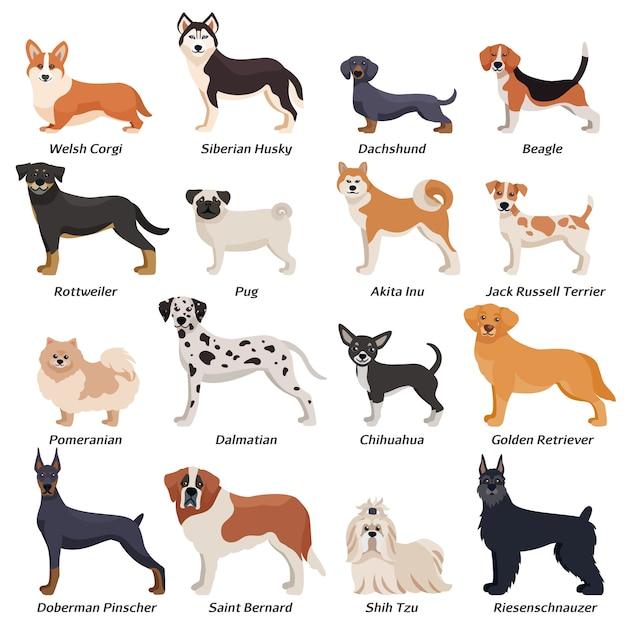 Conjunto de ícones coloridos de cães de raça pura Vetor grátis