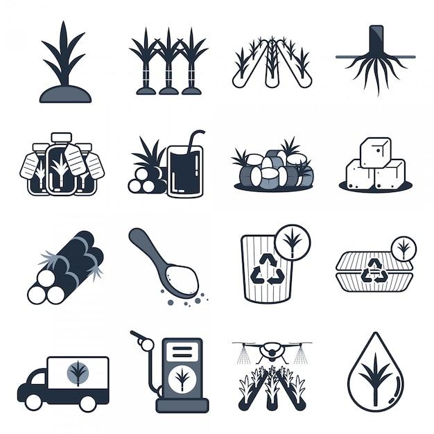 Conjunto de ícones de cana de açúcar Vetor Premium