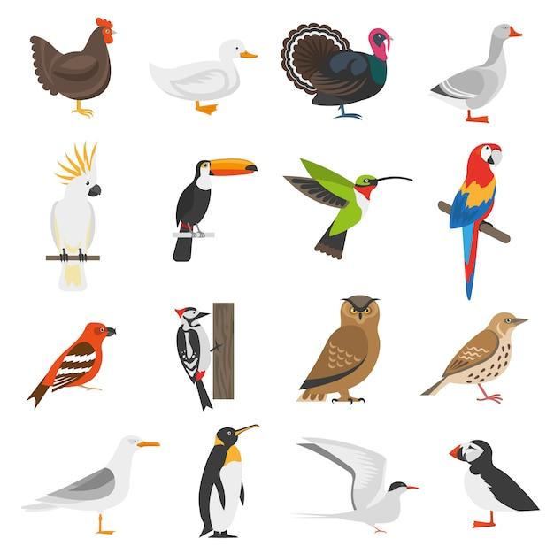 Conjunto de ícones de cor plana de pássaro Vetor grátis