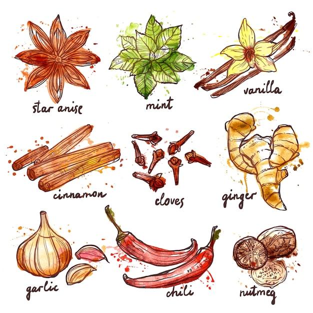 Conjunto de ícones de ervas e especiarias Vetor grátis