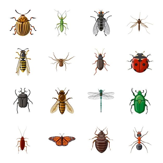 Conjunto de ícones de insetos dos desenhos animados, inseto. Vetor Premium