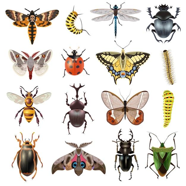 Conjunto de ícones de insetos Vetor grátis