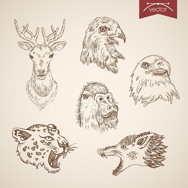 Conjunto de ícones de pássaros de animais selvagens. estilo de gravura caneta lápis hachurado papel para pintar ilustração retro vintage lineart. Vetor grátis