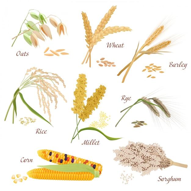 Conjunto de ícones de vetor de plantas de cereais Vetor Premium