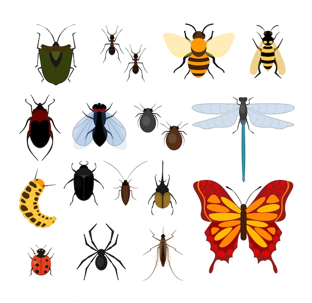 Conjunto de ilustração de diferentes tipos de insetos em ícones e. abelha, mosca e libélulas, aranhas e carrapatos, mosquitos e outros populares coleção de insetos no fundo branco. Vetor Premium