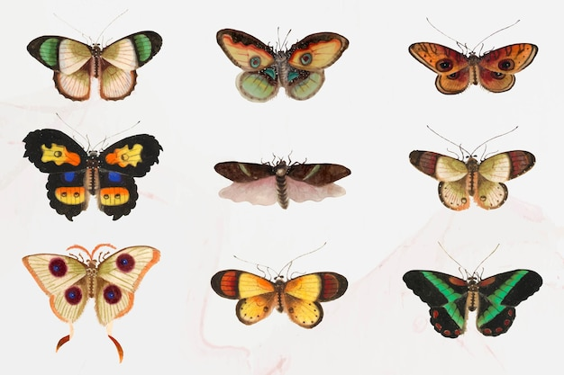 Conjunto de ilustração de mariposas e borboletas Vetor grátis