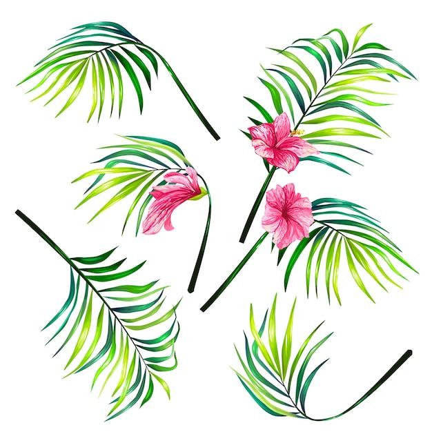 Conjunto de ilustrações vetoriais botânicas de folhas de palmeiras tropicais em um estilo realista. Vetor grátis