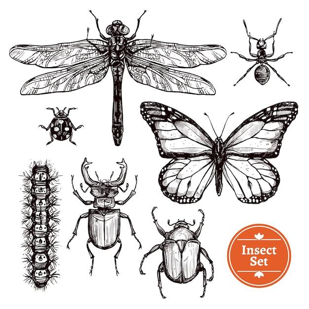 Conjunto de insetos de mão desenhada Vetor grátis